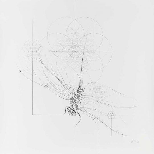 Jessica Albarn | Dragonfly with Geometric Flowers | Fine Art & Contemporary Prints